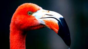 """""""Flamencos verdes"""" — Green flamingos"""